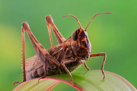fruition: Grasshopper in the grass macro Stock Photo