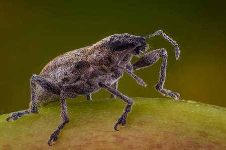 Weevil on the grass macro