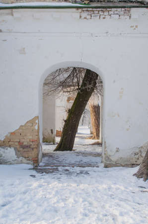 Tree in the arch in the ruins. Stock Photo