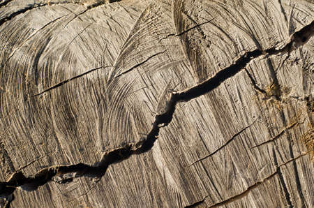 Old Tree Stump Backgroundweathered Wood Texture With The Cross Section Of A Cut Log
