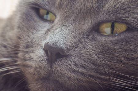 Nose gray cat macro with blurred background. Фото со стока