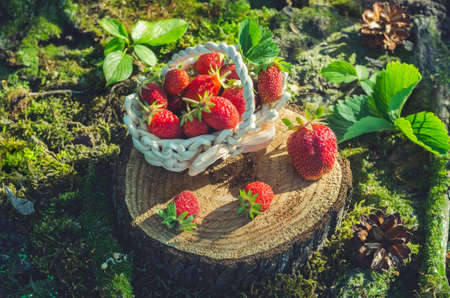 Ripe strawberries in a basket on a stump in a sunny garden.