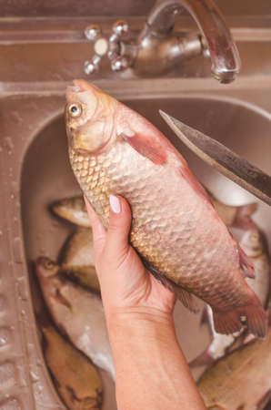 freshwater fish: Gutting and cleaning of fish over the sink.