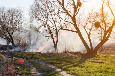 마른 잔디의 점화. 화재 위험