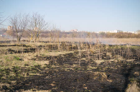 Scorched dry grass in the field. Stock Photo