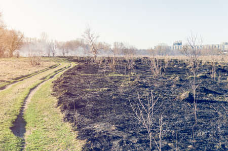 Scorched dry grass in the field.