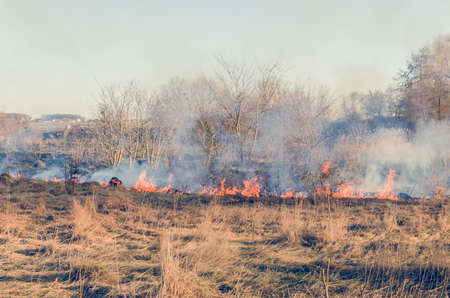 The fire of dry grass in the field. Stock Photo