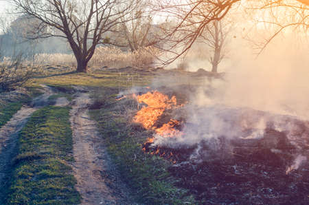 Ignition of dry grass. Fire danger