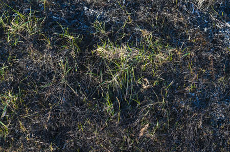 Ashes after burnt grass, background texture Stock Photo