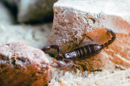 Scorpion sitting on a stone close up.
