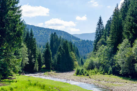 Carpathian landscape, a mountain river flows in the forest. Holidays in the mountains.