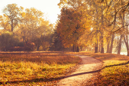 Footpath in a beautiful colorful autumn park.