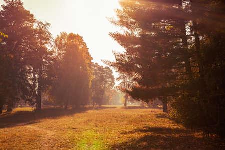 Autumn park, sunlight breaks through the colorful foliage on the trees. Zdjęcie Seryjne
