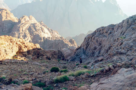 Mountain landscape at sunrise, view from Mount Moses, Sinai Peninsula, Egypt. Reklamní fotografie