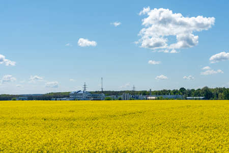Industrial plant in yellow spring rapeseed field on a sunny day with beautiful blue sky.