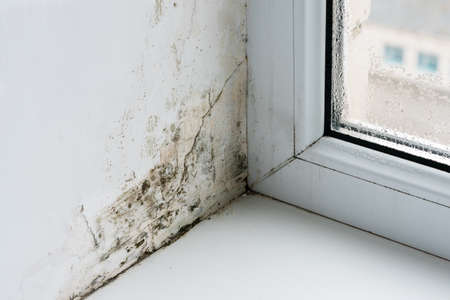 Mold in the corner of the plastic windows. Stock Photo