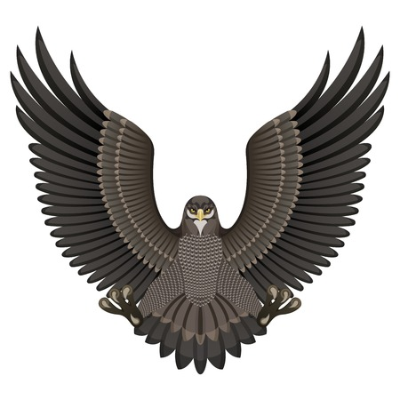 swooping: Vector illustration of an eagle isolated on white background