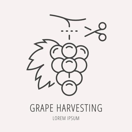 harvesting: logo or label wine harvesting.