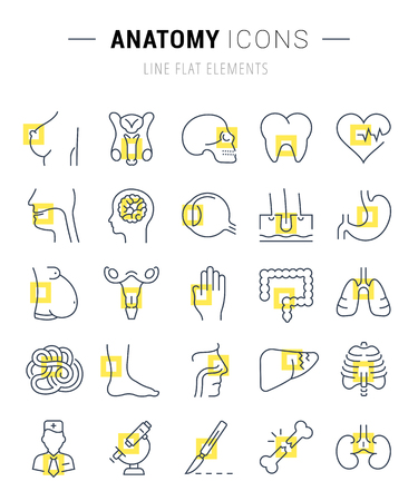 Set vector line icons, sign and symbols in flat design anatomy with elements for mobile concepts and web apps. Collection modern infographic logo and pictogram. Illustration