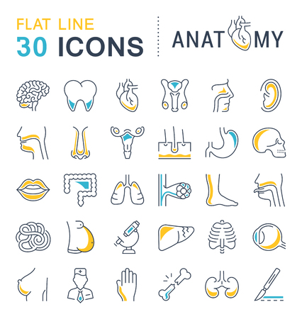Set line icons, sign and symbols in flat design of anatomy and physiology with elements for mobile concepts and web apps. Collection modern infographic logo and pictogram.