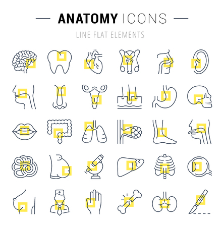 Set vector line icons, sign and symbols in flat design of anatomy and physiology with elements for mobile concepts and web apps. Collection modern infographic logo and pictogram. Logo