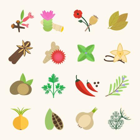 Set vector illustration of spice. Flat elements on white background Illustration