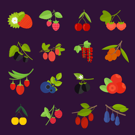 Set vector illustration of berries. Flat elements on white background
