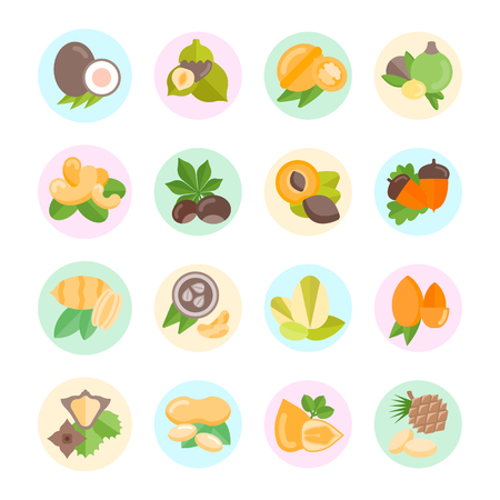 Set vector illustration of nuts. Flat elements  with color round backdrops on white background Illustration