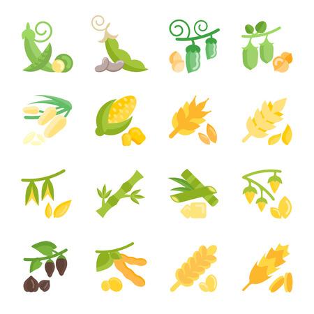 豆や穀物のベクトル図を設定します。白い背景の平らな要素
