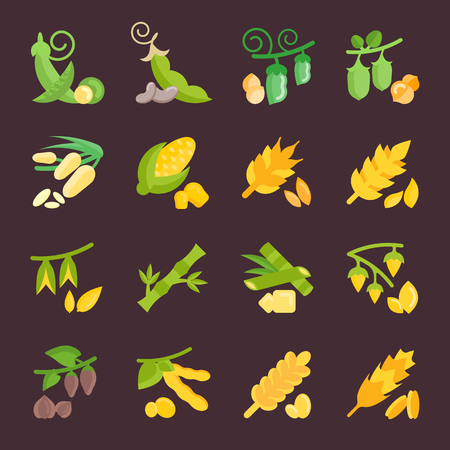 Set of beans and grains icons.  イラスト・ベクター素材