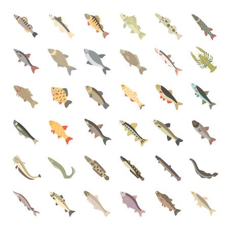 Set vector illustration of freshwater fish. Flat elements on white background. Illustration
