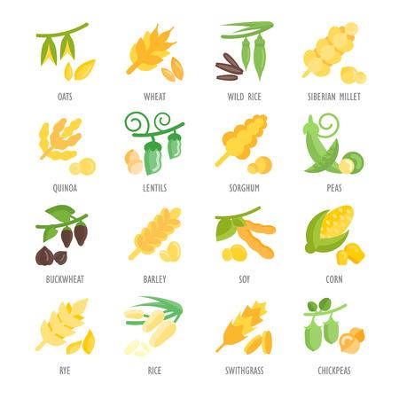Set vector illustration of groats. Flat elements on white background