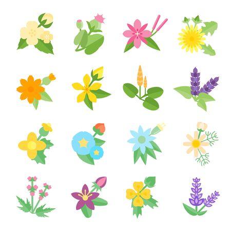 calendula: Set vector illustration of herbs. Flat elements on white background. Illustration