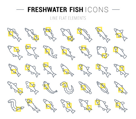 Set of vector line icons and signs with yellow squares of freshwater fish for excellent concepts. Collection of infographics logos and pictograms.
