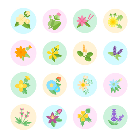 Set vector illustration of herbs. Flat elements on white background.