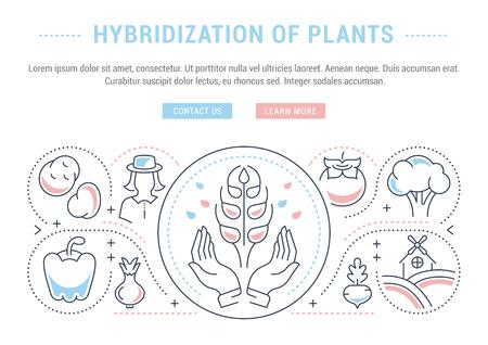 植物のハイブリダイゼーションの線図。ウェブバナーや印刷物のコンセプト。ウェブサイトのバナーとランディングページのボタンを持つテンプレ  イラスト・ベクター素材
