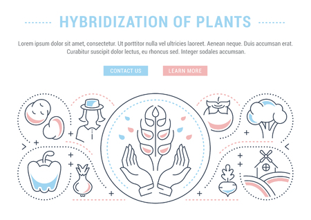 Line illustration of hybridization of plants. Concept for web banners and printed materials. Template with buttons for website banner and landing page.