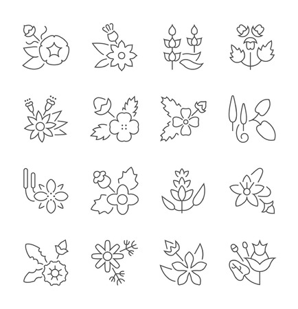 Collection of line gray icons of herbs. Set of vector simple concepts for creative projects and apps. Info graphics elements and pictograms.