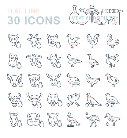 Set of vector line icons, sign and symbols with flat elements of meat and poultry for modern concepts, web and apps. Collection of infographics and pictograms. Ilustração