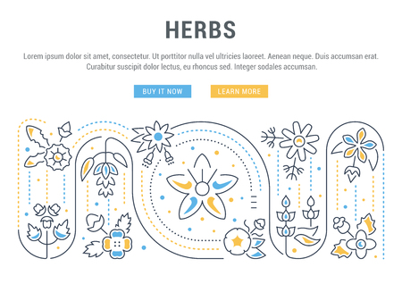 Line illustration of herbs. Concept for web banners and printed materials.