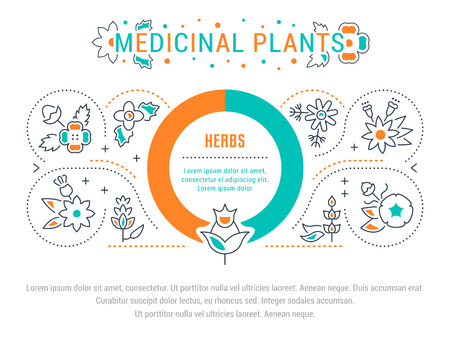 Line illustration of medicinal plants. Concept for web banners and printed materials. Template for website banner and landing page. Illustration