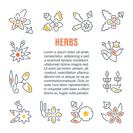 Line illustration of herbs. Concept for web banners and printed materials. Template for website banner and landing page.