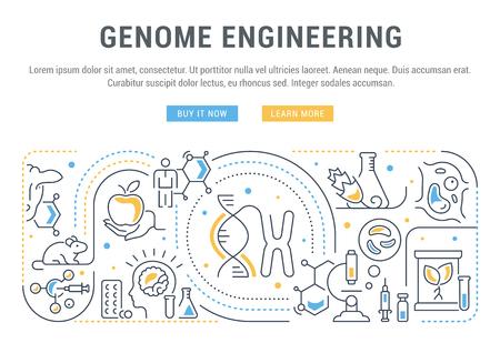 Banner de línea de ingeniería del genoma. Ilustración vectorial del concepto lineal del proceso que crea el organismo modificado genéticamente. Ilustración de vector