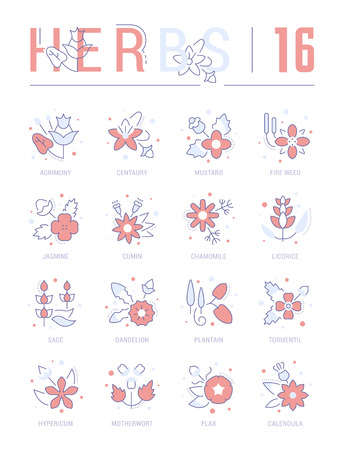Collection of vector flat icons with thin line elements of herbs. Set of clean design, and outline signs. Simple linear infographics and pictograms pack for web graphics and apps. 向量圖像