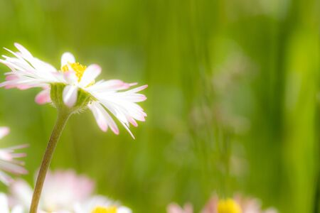White summer flowers on a defocused natural background. Closeup of flowers with shallow depth of field.
