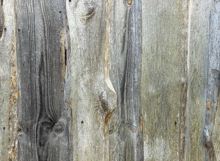 Timber wood wall texture background. Closeup of old wood planks texture background