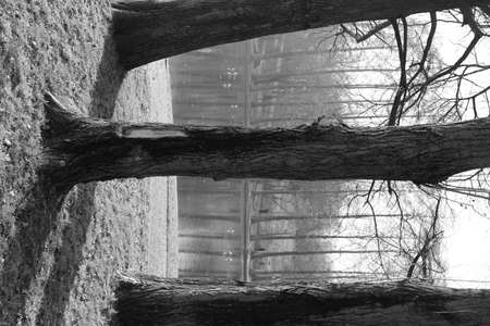 Black and white view of tree trunks in the foreground and background in a Bucharest park, forming an abstract repetitive pattern