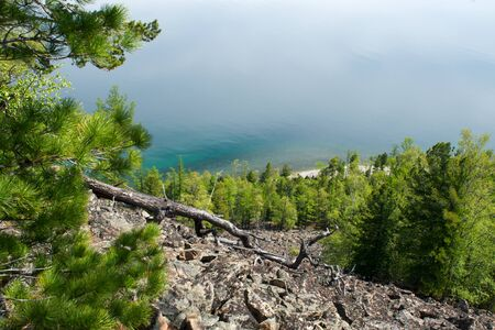 Coniferous trees on shore of lake. Irkutsk region. Russia