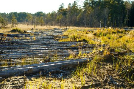 Drift wood on the marshes in the forests of the Altai
