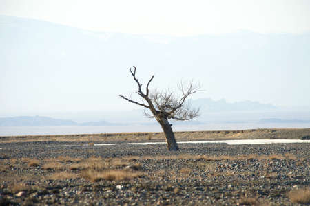 A lone dry tree against the backdrop of the Altai Mountains in Mongolia Stock Photo